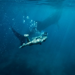 diving-whale-shark-sighting-3