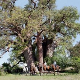 horse-riding-safari